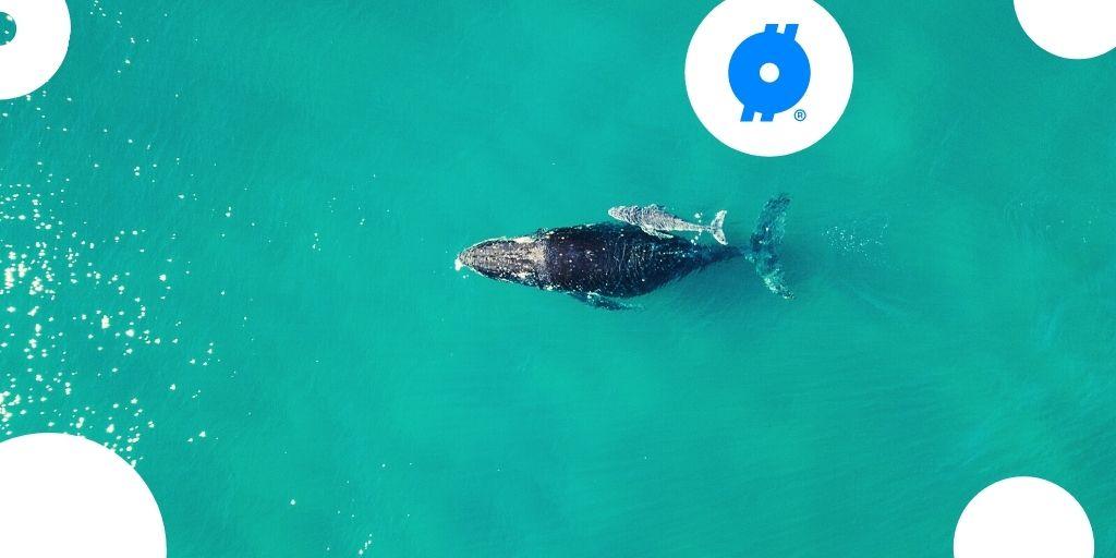 Deze twaalfjarige verdient 350.000 euro in Ethereum met verkoop NFT's van rare walvissen
