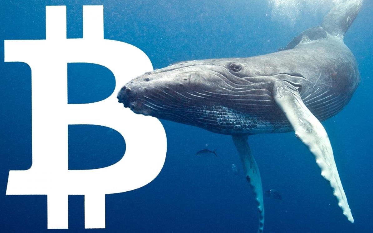 Dev Balina, 9 Yıldır Uyuyan Bitcoin'leri Harekete Geçirdi