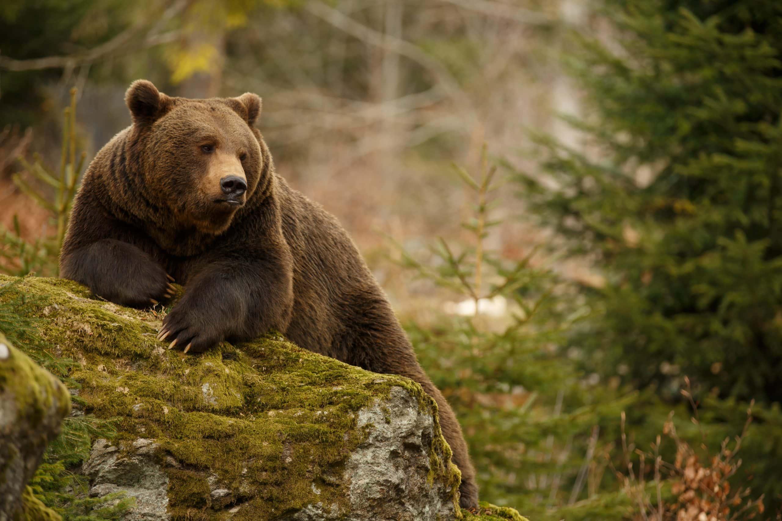Bitcoin-Kurs: Bären können ersten Teilerfolg für sich verbuchen | BTC-ECHO