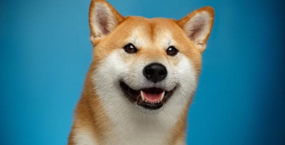Le Dogecoin plus populaire que jamais… alors que l'activité de sa blockchain a atteint son plus bas depuis 2017