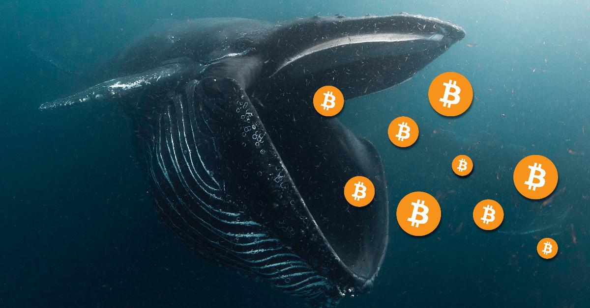 Bitcoin : alors que les whales accumulent des BTCs, une nouvelle flambée pourrait prochainement survenir selon Santiment