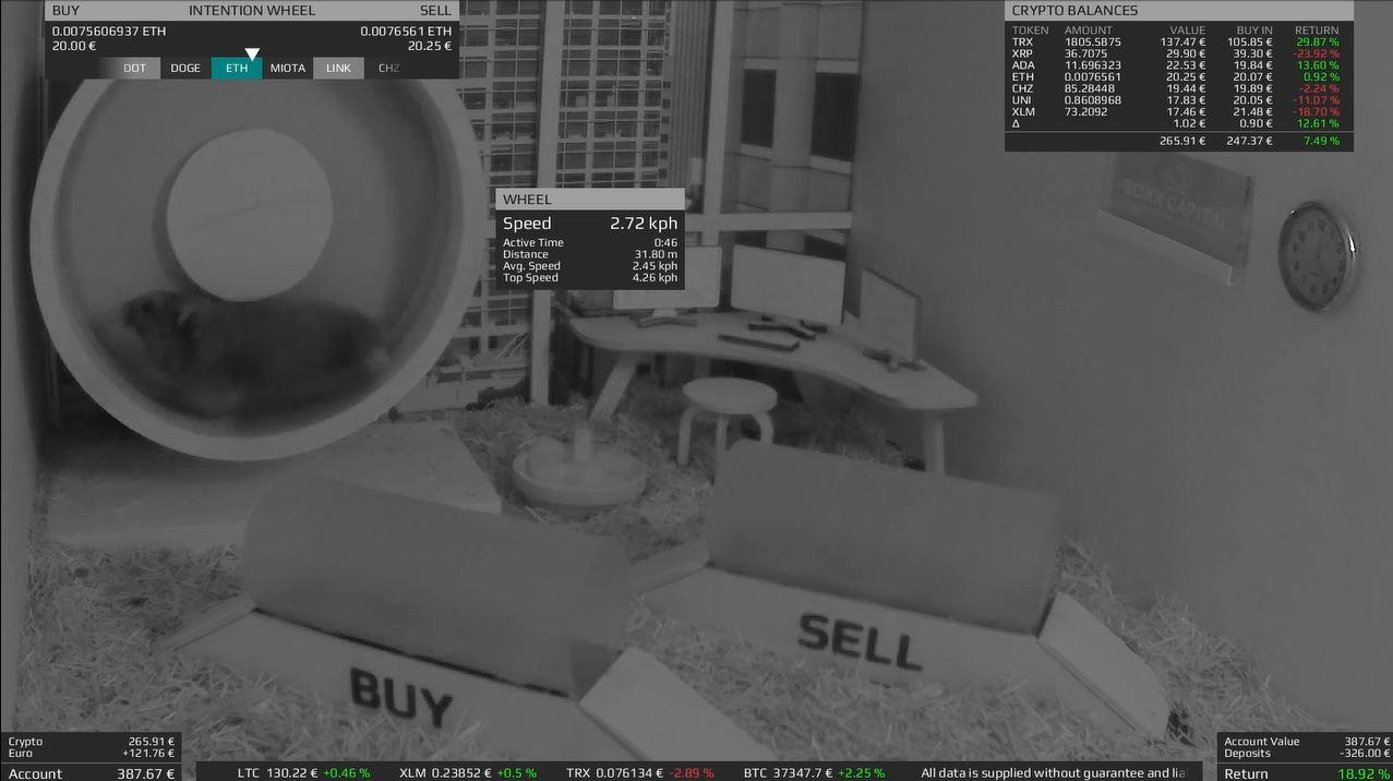 Conheça o hamster trader que ganha mais dinheiro que vendedores de cursos