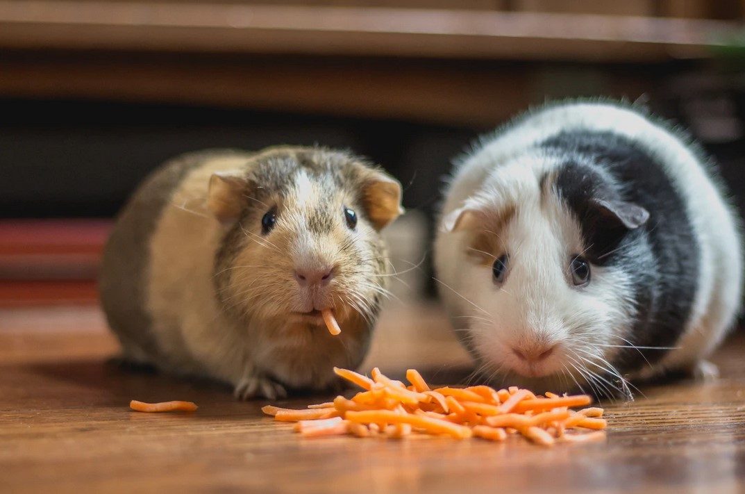 How This Crypto Trading Hamster Is Outperforming You