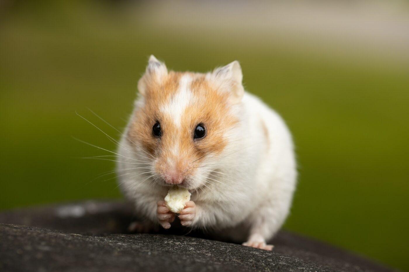 Ein Kryptohandel-Hamster übertrifft Warren Buffet