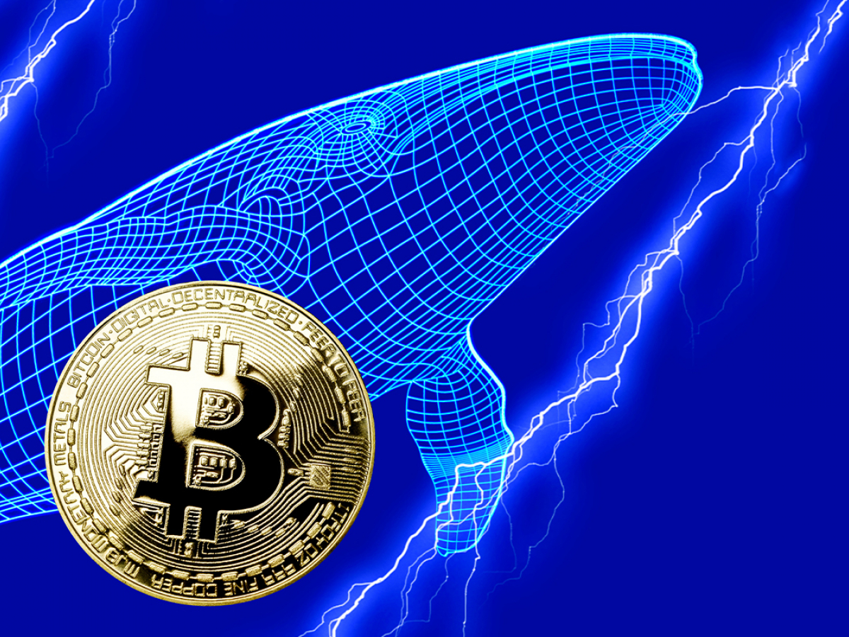 Bitcoin Whales Buying Activity On Rise With 254 New Whales Entering Market
