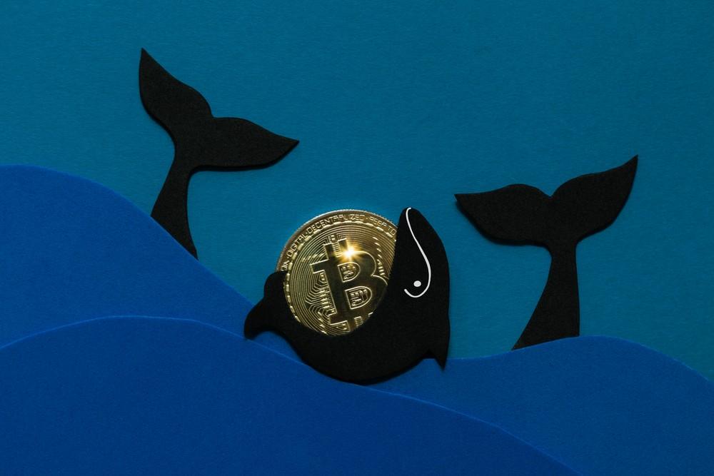 Ballenas Bitcoin desaceleran su acumulación de BTC ¿Cómo y por qué?