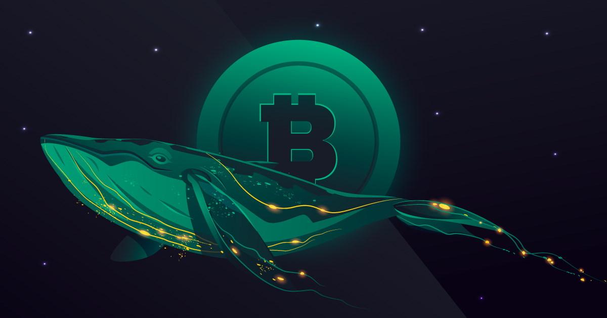 Bitcoin : le nombre de «whales» atteint son plus bas depuis 2012