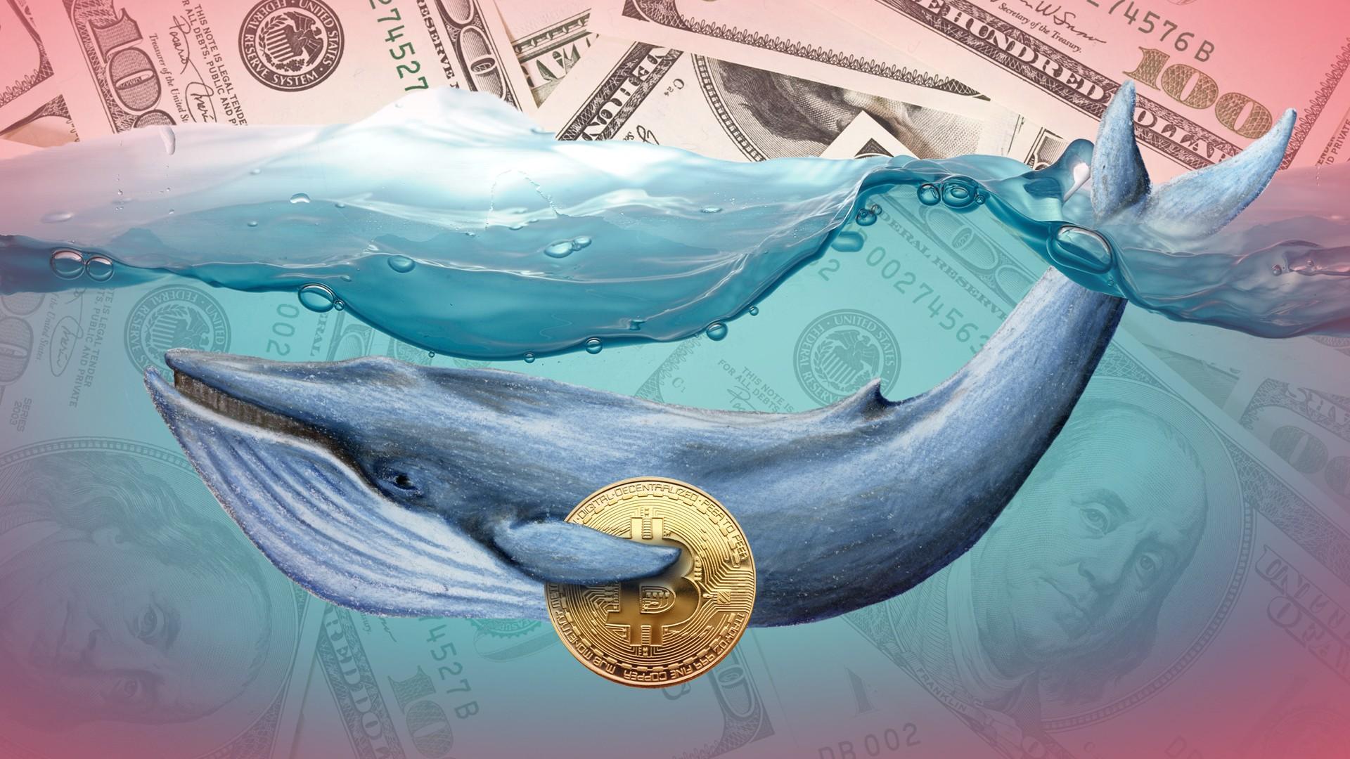 """Những chú cá voi Bitcoin lớn nhất thế giới đang sắp """"tuyệt chủng"""" – Dấu hiệu này là gì?"""
