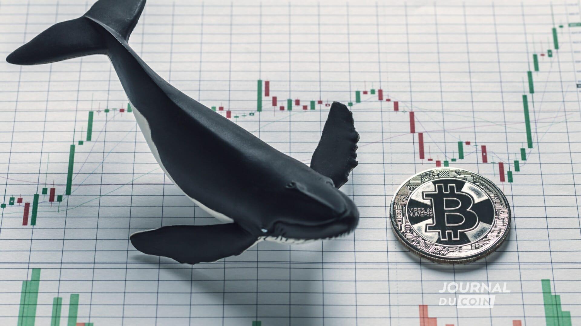 Les baleines de Bitcoin en voie de disparition ?