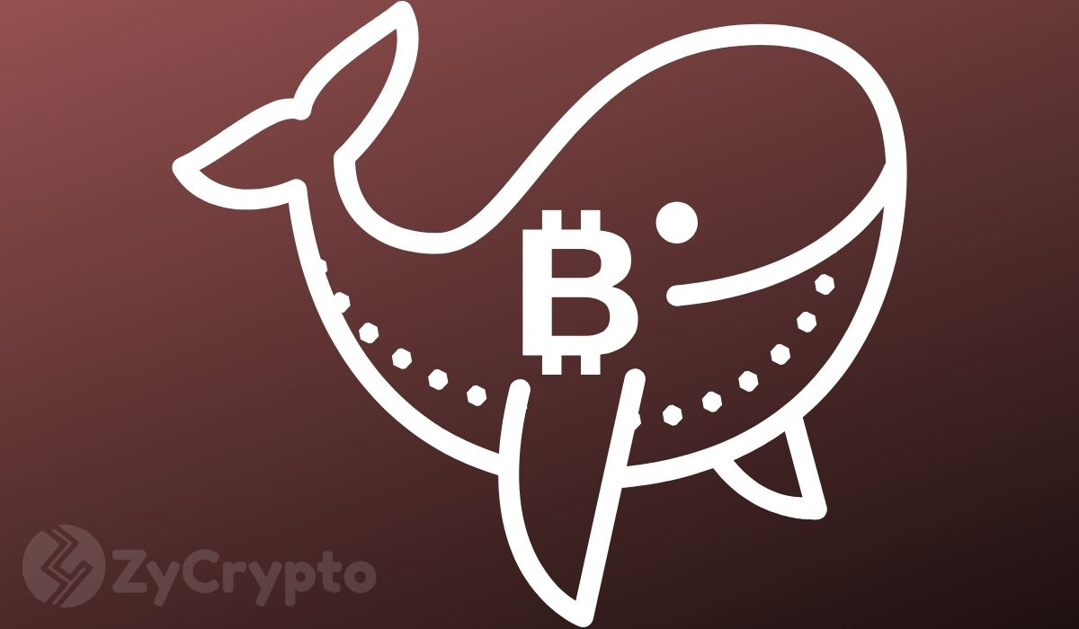 Number Of Large Bitcoin Whales Are Dropping At An Alarming Rate — Here's What This Means