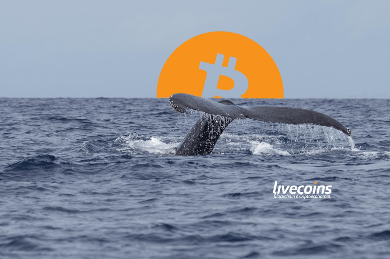 Baleia de bitcoin abandona redes sociais após errar previsões e virar chacota