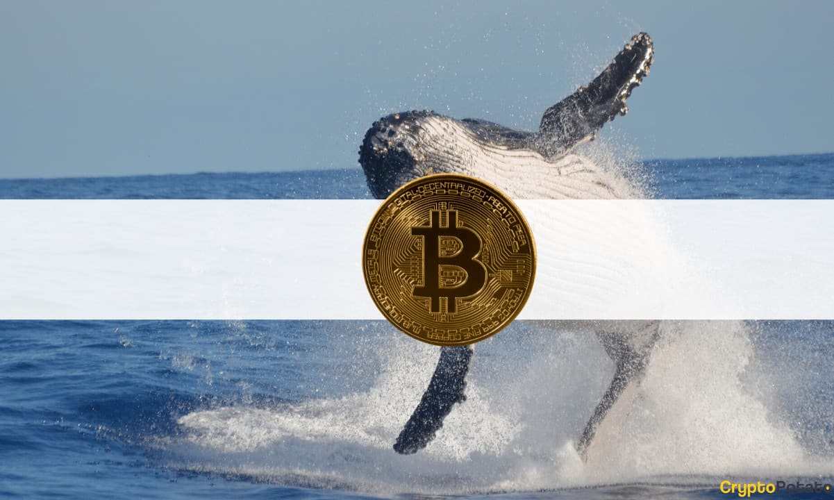 Back Again: Third-Largest Bitcoin Whale Bought $37 Million in BTC