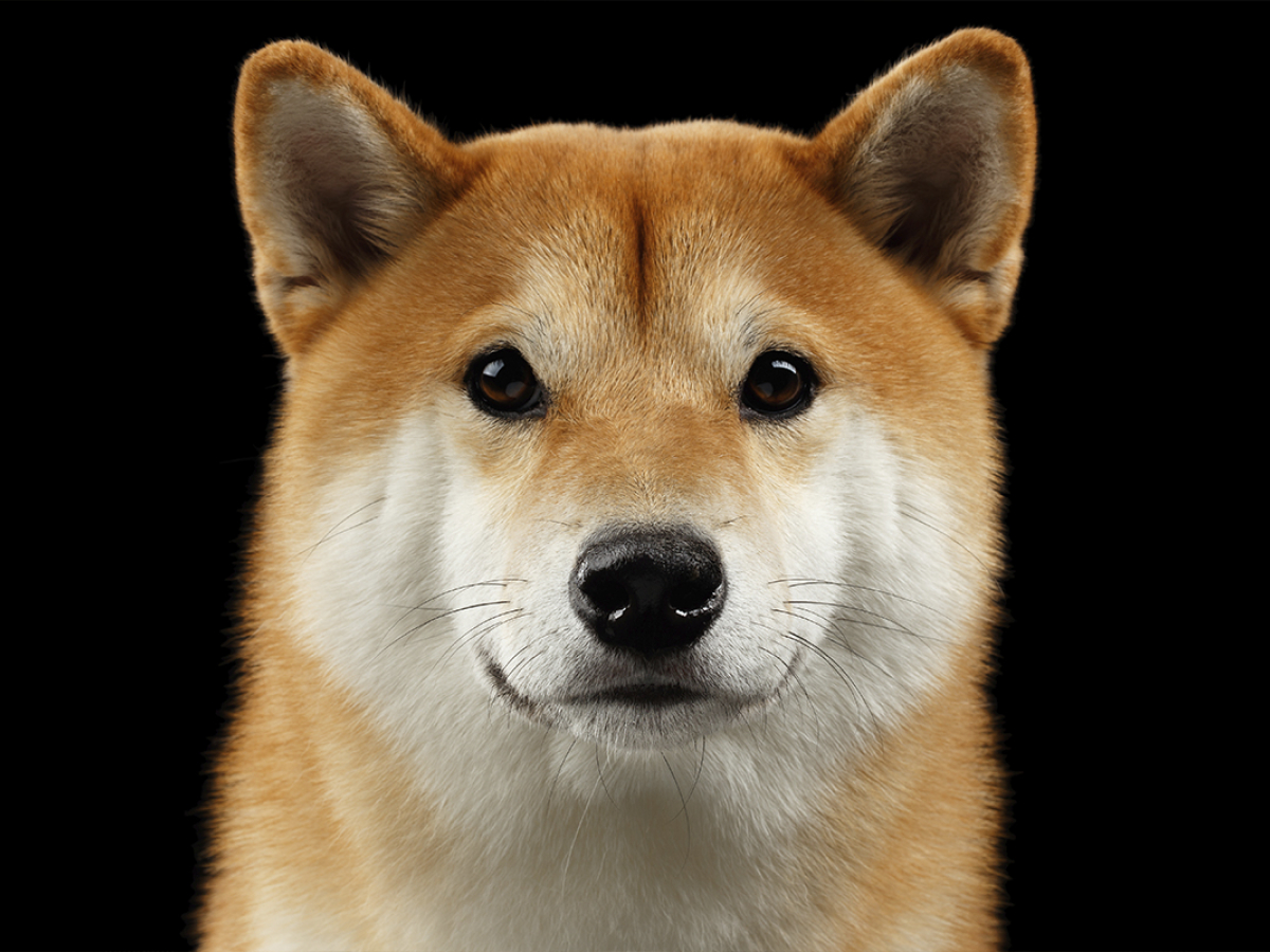 Coinbase Crashes as Shiba Inu Goes Ballistic After Surpassing Dogecoin