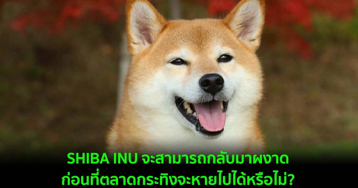 SHIBA INU จะสามารถกลับมาผงาดก่อนที่ตลาดกระทิงจะหายไปได้หรือไม่?