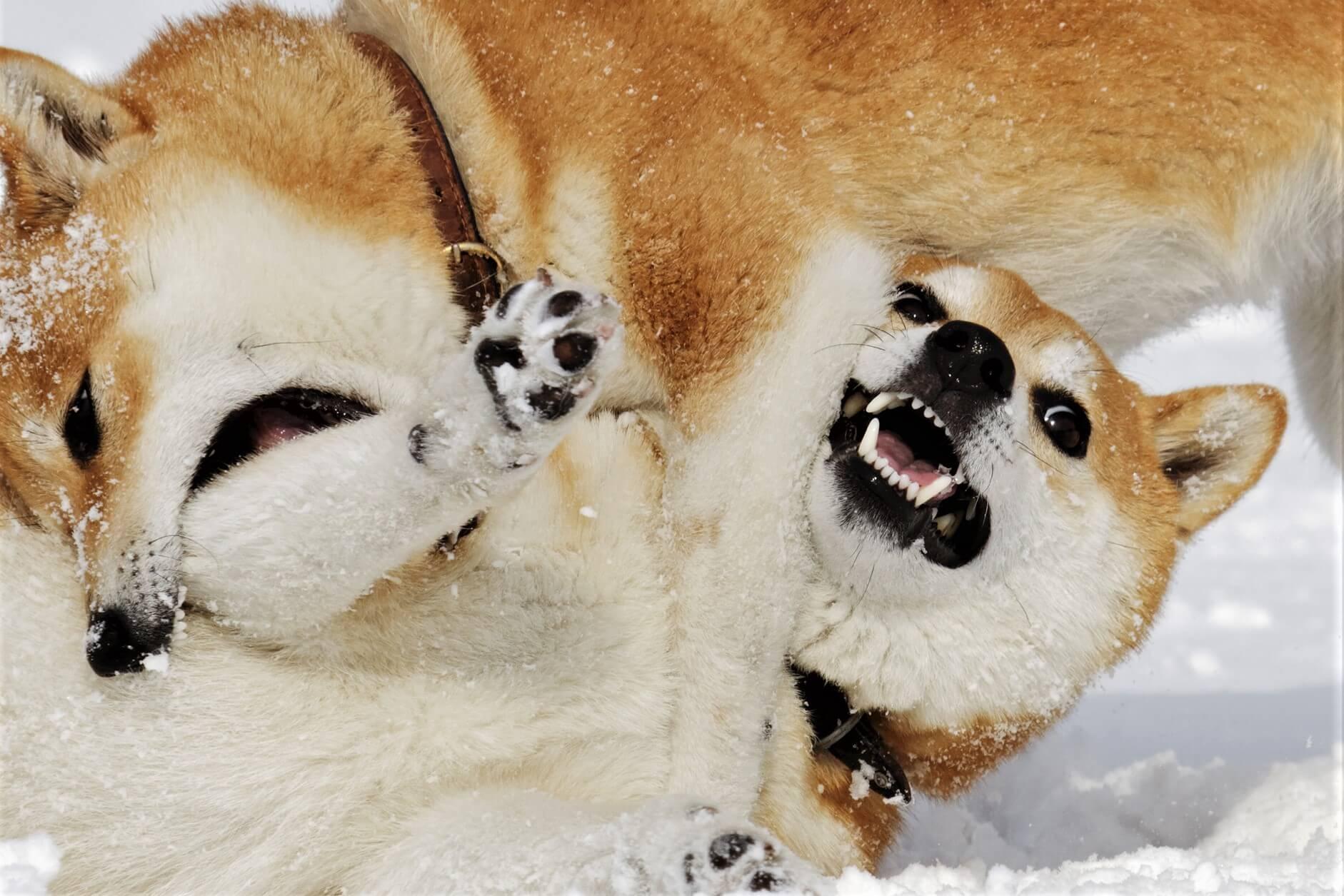 Dogecoin Milyoneri ve 3 Analistten DOGE ve SHIB Tahminleri