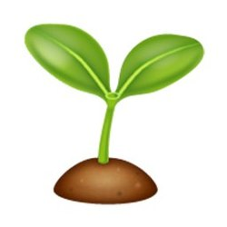 Tulip Seed